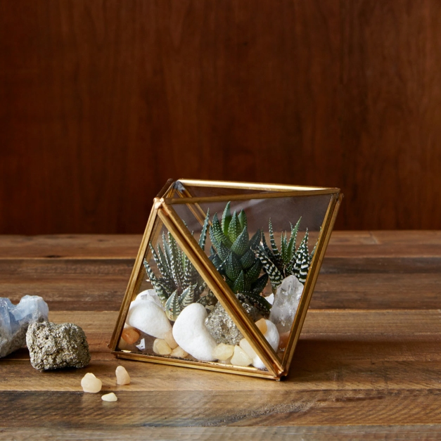 Faceted Terrariums from £29