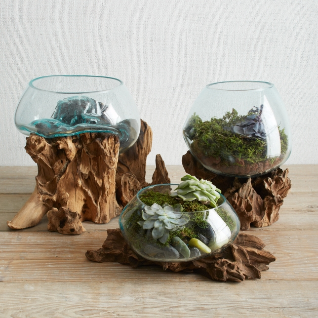 Wood + Glass Terrariums from £44(1)