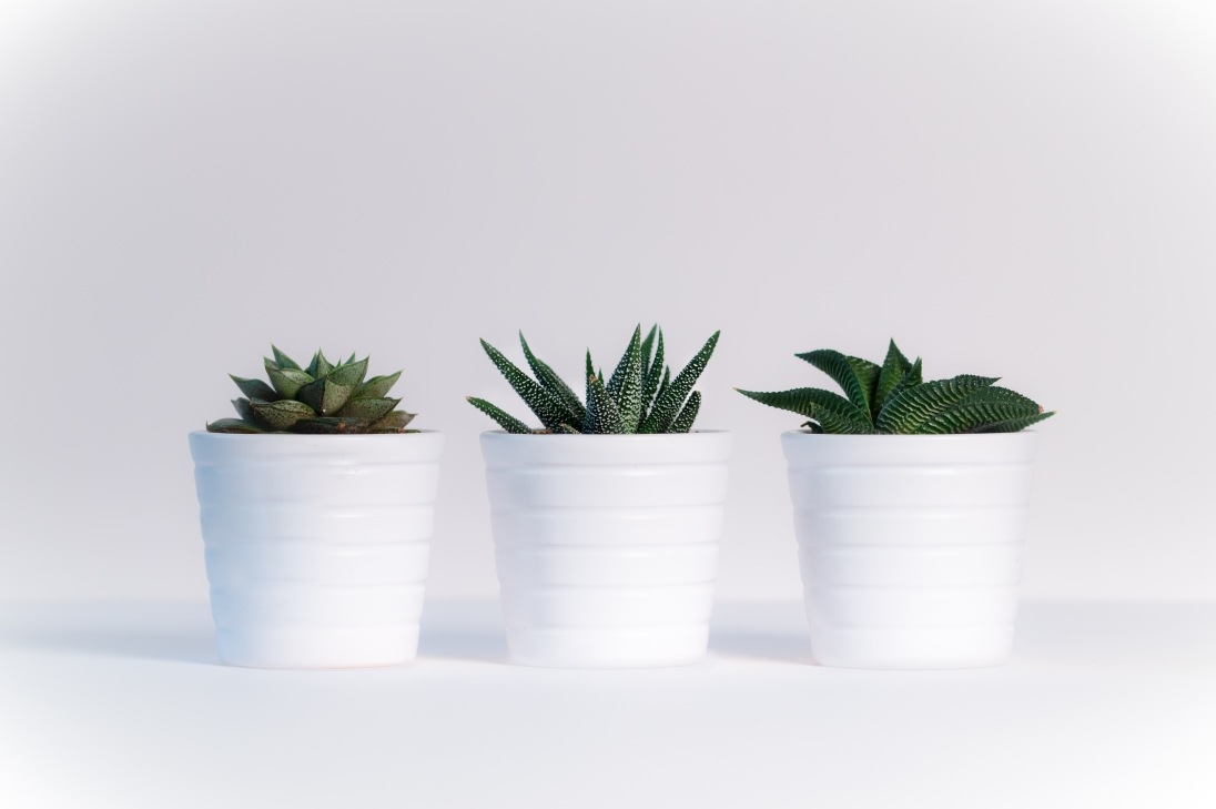 plants-pexels-photo-776656
