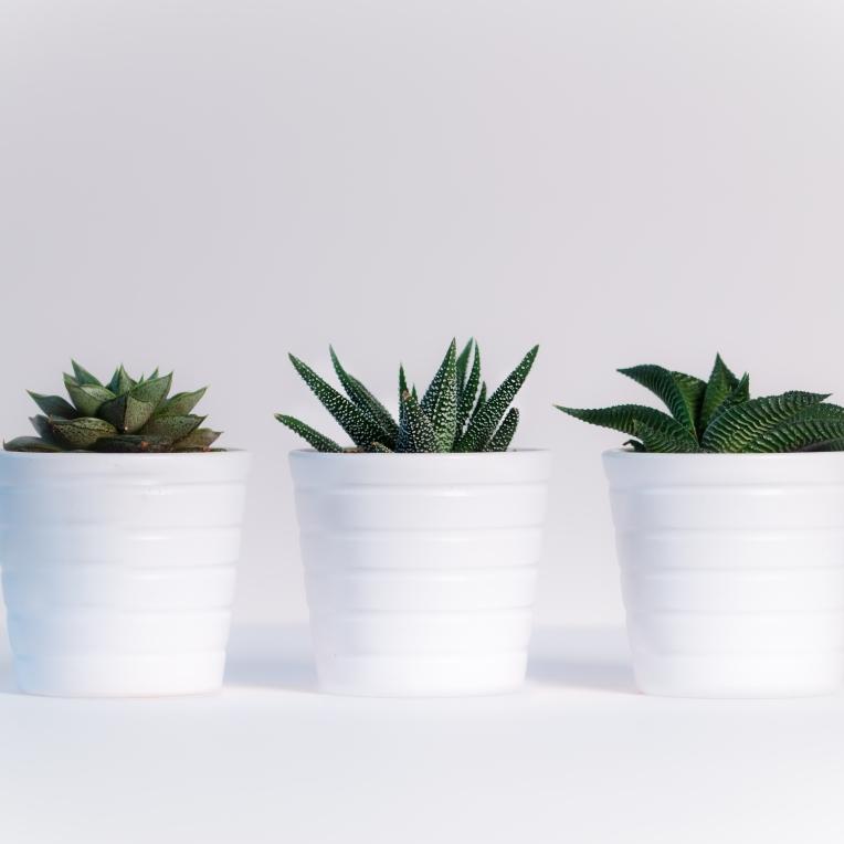 plants-pexels-photo-776656