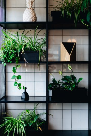 decors-plants-shelves-1701535
