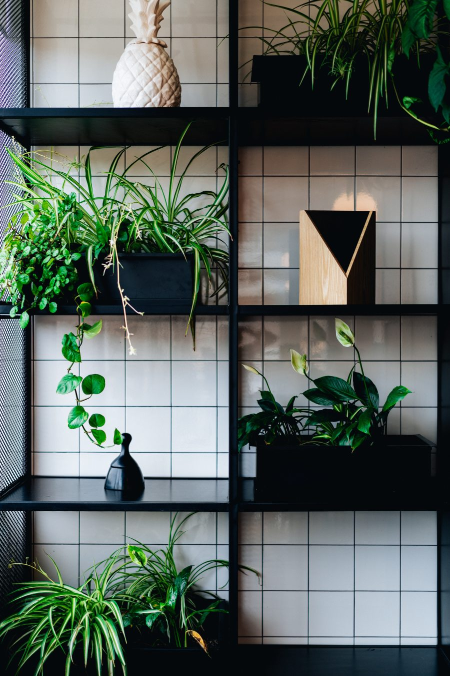 decors-plants-shelves-1701535